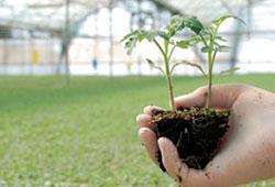 Organikte üretim arttı fiyatlar düştü