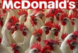 Tavuk eziyetine sessiz kalmadılar!