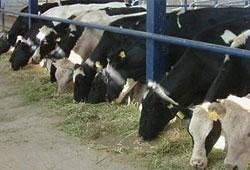 Hayvancılıkta 5 büyük adım