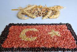 Tohumcuların 2013 adresi Türkiye olacak!