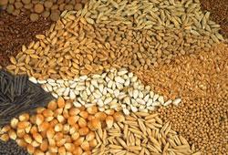 Aydın'da yerli tohum seferberliği