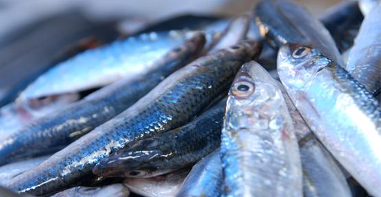 Av yasağı balık fiyatlarını etkiledi