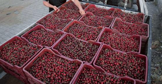 Erzincan'da kiraz üretimi sevindirdi