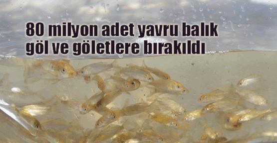 Göletlere 80 milyon balık bırakıldı
