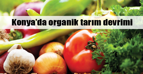 Konya'da organik tarım devrimi