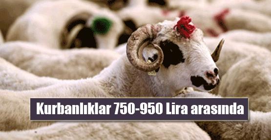 Kurbanlıklar 750-950 lira arasında