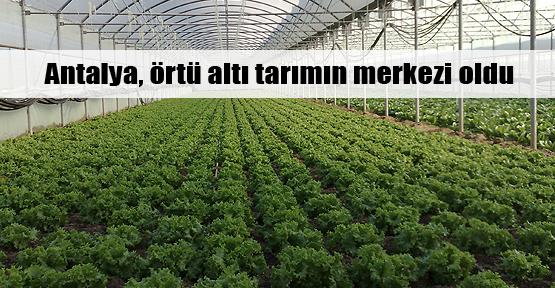 Örtü altı tarımda Antalya farkı