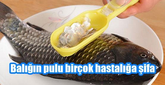 Pulu en az balık kadar faydalı