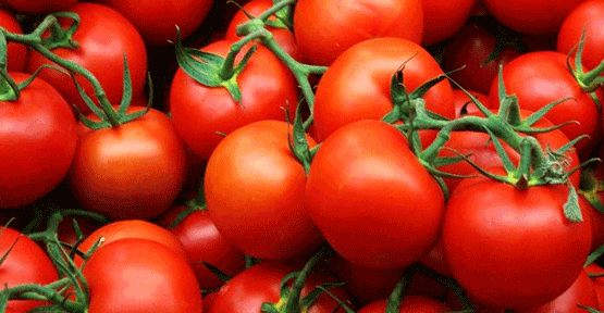 Rusya domates için hazır değilmiş!