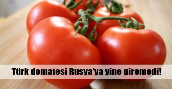 Rusya Türk domatesine kapalı!