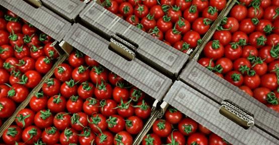 Rusya'dan domates üreticisine müjde