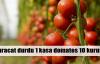 1 kasa domates 10 kuruşa düştü