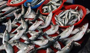 Su ürünleri ihracatında rekor artış