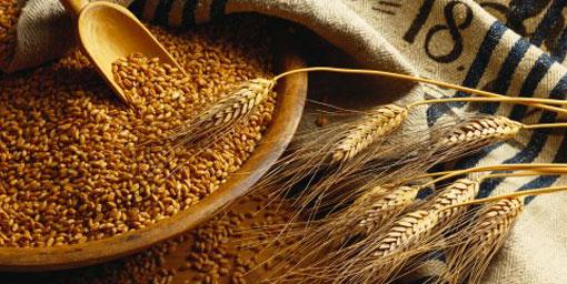 Türkiye'de buğday üretimi artacak