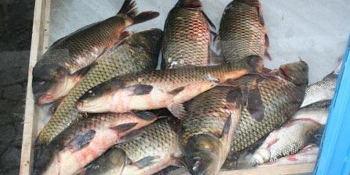 Bu göldeki balıkları sakın yemeyin!