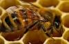 7 milyar arıya ihtiyaç var