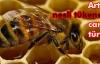 Avrupa arılar için seferber oldu