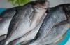 Avrupalı Türk balığıyla doyuyor