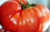 Bu domates görenleri şaşırtıyor
