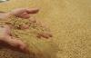 Buğday üretimi yüzde 50 azalacak