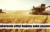 Buğdayda 'yarım hasad' hüznü!