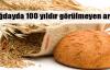 Buğdayda yüzyılın rekoru kırılıyor