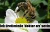 Çileği 'doktor arılar' koruyor