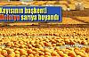 Kayısı kenti Malatya sarıya boyandı