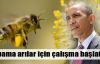 Obama arılar için çalışma başlattı