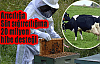Süt sığırcılığına 20 milyon hibe desteği