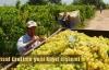 Tarımsal Üretim'e yeni kayıt sistemi