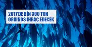 Balık ihracatının yeni yıldızı: Orkinos