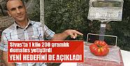 Sivas'ta 1 kilo 200 gramlık domates