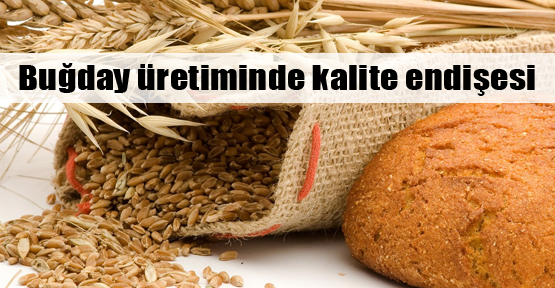 Türkiye buğday ithal edebilir