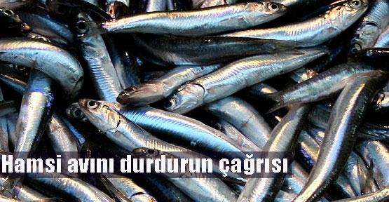 Türkiye dönüş göçündeki hamsiyi yiyor!