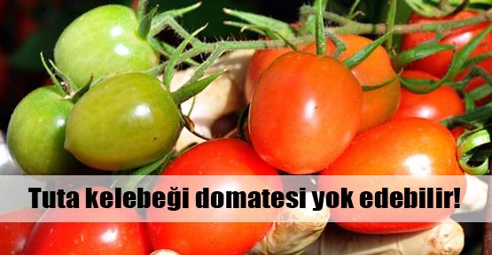 Ucuz domatesi unutun uyarısı!