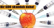Genetiği değiştirilmiş elmaya onay!