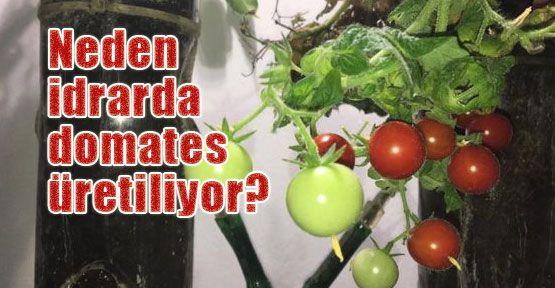 Uzayda gıda üretimi mümkün olacak mı?