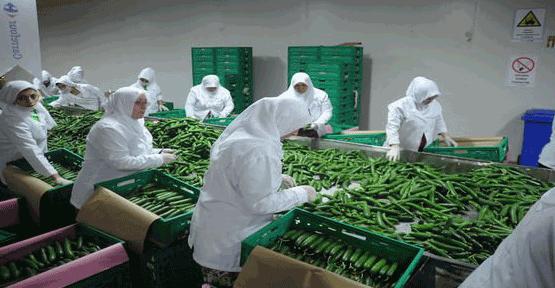 Yerli tohumla küçük üretici destekleniyor