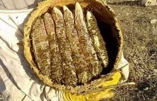 Anzer Balı'nda bal sağımı gerçekleştirildi