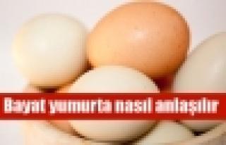 Bayat yumurtayı anlama testi