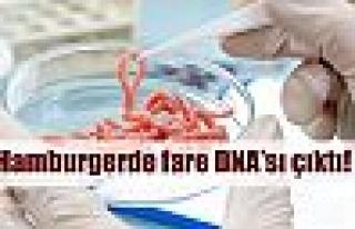 Hamburgerden fare DNA'sı çıktı