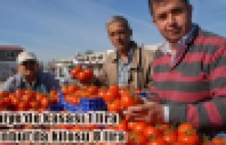 İstanbul'da domates 8 lira oldu!