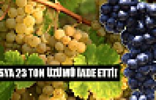 Rusya 23 ton üzümü iade etti