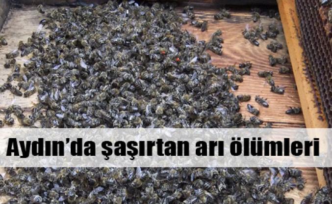 Arı ölümlerinde kimyasal iddiası